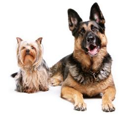Dog Day Care Charlottesville, VA